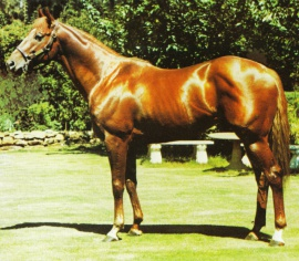 Taxiarchos