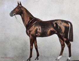 ARD PATRICK Skeets Martin  Derby winner in 1902.