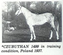 Czubuthan