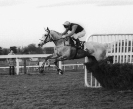 Desert Orchid Colin Brown winning Oteley Hurdle Sandown Park 1985