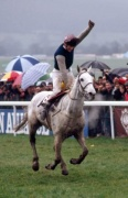 Desert Orchid 1989 Gold Cup