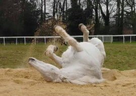 DESSIE on his 27th birthday rolling in the sand