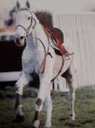 Desert Orchid off on his own ,he loved it