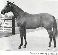 Song