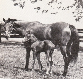 Little Hut with her 1976 Mr Leader colt named Shack at foot. none given