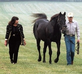 Seattle Slew at stud Stars of the Track IG page / America's Best Racing