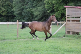 Quarter Note GSH
