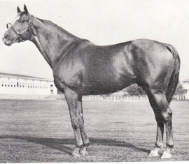 Discovery stallion pic