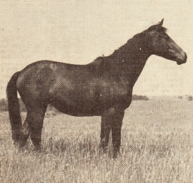Lahaina
