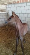 Azzam Al Badry