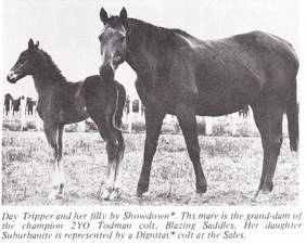 Day Tripper