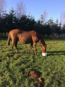 Pounce