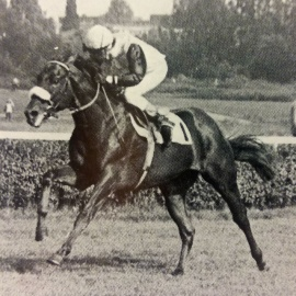 SURUMU - finish - German Derby 1977