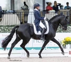 Royal PrinzRubinero - Oldenburg StallionSusan Stickle