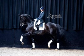 ContucciEverdale (Lord Leatherdale-Negro)Photo: Equigeniek
