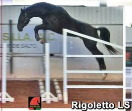 RebozoRigoletto LS