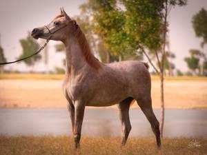 Cherifa Al RayyanMayssa Al Waab