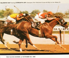 Majestic Kat