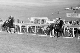 The 1977 Blue Ribbon Trial - Epsom Be My Guest & Lester Piggott , wins from Saros & Pat Eddery