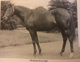 Blenheim at Claiborne Stud Sire Lines by Abe Hewitt