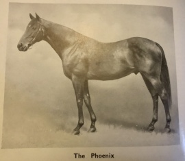 The Phoenix