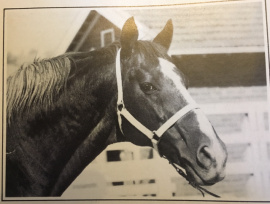 Wilkes at stud Australian Thoroughbreds 1982