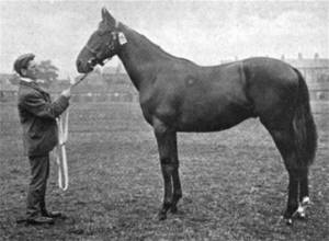 Pietermaritzburg pictured at the 1899 Doncaster yearling sale.