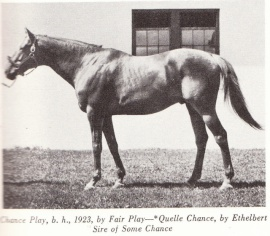Chance Play pictured at stud none given