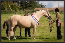Solaris DwenquaSolaris Ezanndra 2014 with buckskin filly Jeux D'Amour by Amoureux