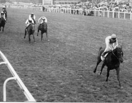 Warning (Pat Eddery) winning the Queen Elizabeth II Stakes from Salse & Persian Heights