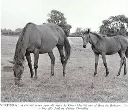 Verdura