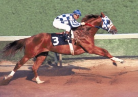 Secretariat at the Preakness Stakes 1973