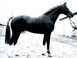 Furioso II