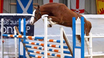International Sport Horse Data for Genetic Evaluation