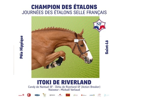 Itoki de Riverland is the new Selle Français Stallion Champion