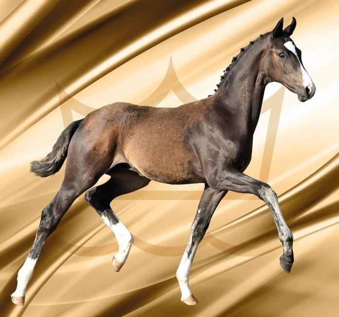 Danish Warmblood Foal Auction 2017
