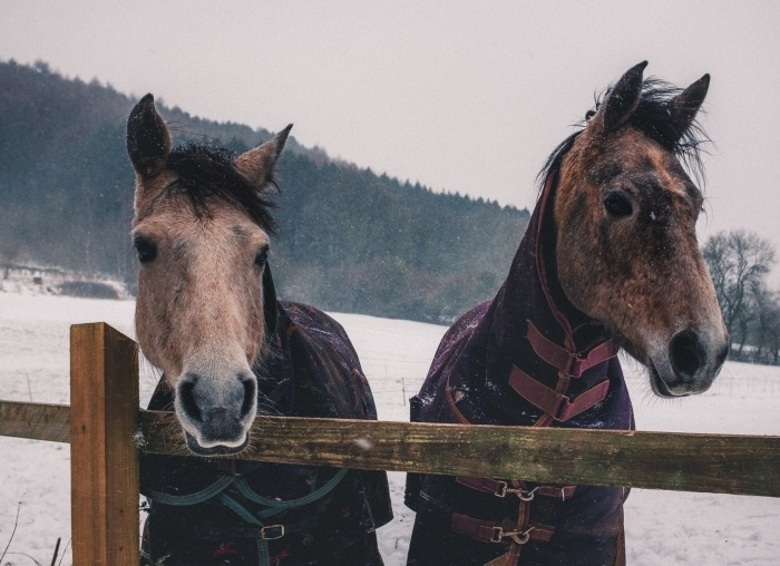 Protecting your horse this winter