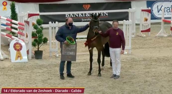 Eleven show jumping stallions licensed at the South German Stallion Days 2021, Champion by. Eldorado