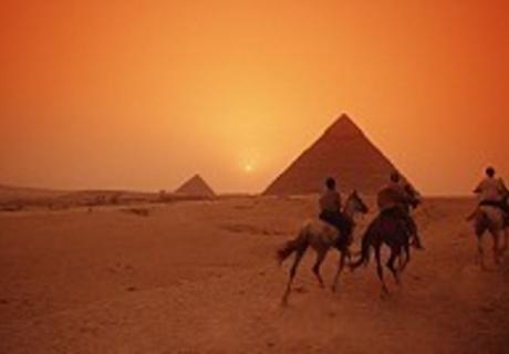 Mahrus Egyptian Arabians