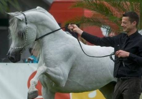 Al Firdous Arabians