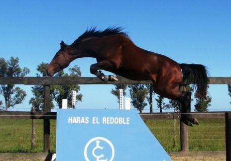 Haras El Redoble