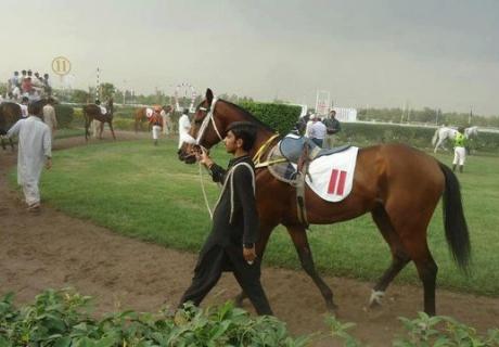 Pakistan ThoroughBred Horse