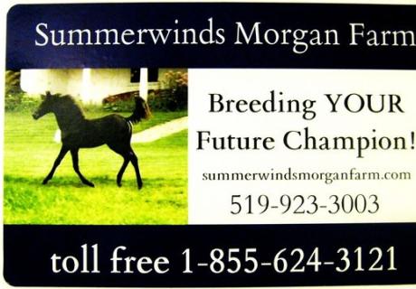 Summerwinds Morgan Farm