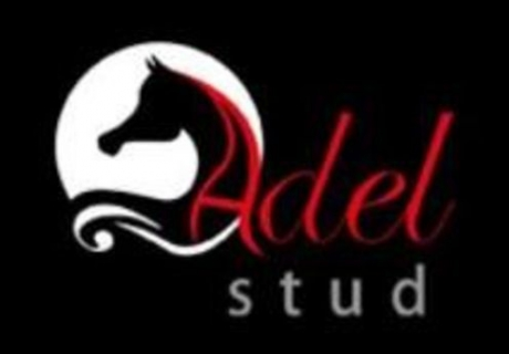 Adel Stud