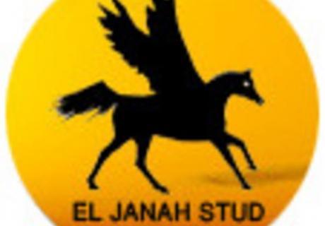 El Janah Arabians