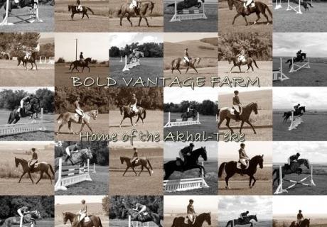 Bold Vantage Farm