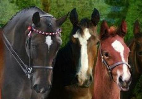 Colormore Stud Horses