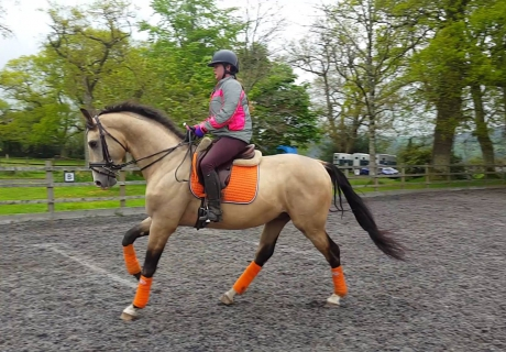 Foxboro Performance Horses