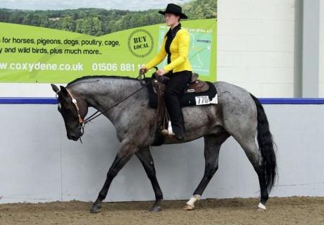 Cody Quarter Horses