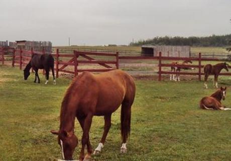 Mariposa Sport Horses